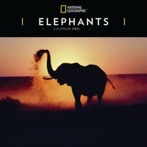 Elephants National Geographic Kalender 2021