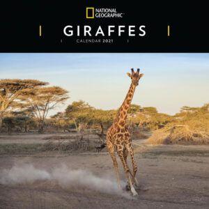 Giraffes National Geographic Kalender 2021