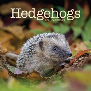 Hedgehogs Kalender 2021