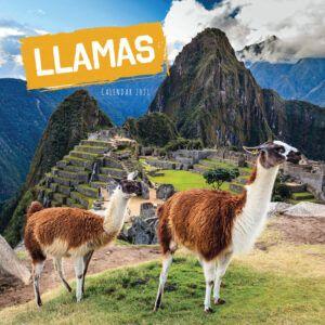 Llamas Kalender 2021