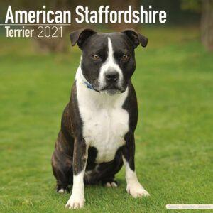 American Staffordshire Terrier Kalender 2021
