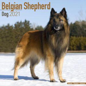 Belgian Shepherd Kalender 2021
