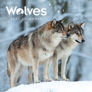 Wolves Mini Kalender 2021