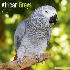 African Greys Kalender 2021