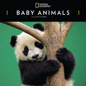 Baby Animals National Geographic Kalender 2021