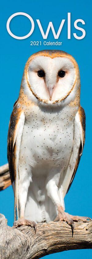 Owls Slimline Kalender 2021