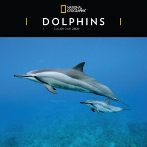 Dolphins National Geographic Kalender 2021