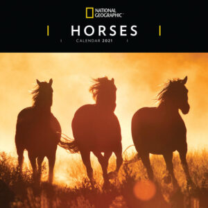 Horses National Geographic Kalender 2021