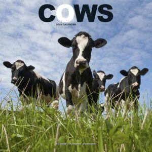 Cows Kalender 2021