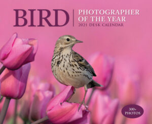 Bird Photographer Boxed Kalender 2021