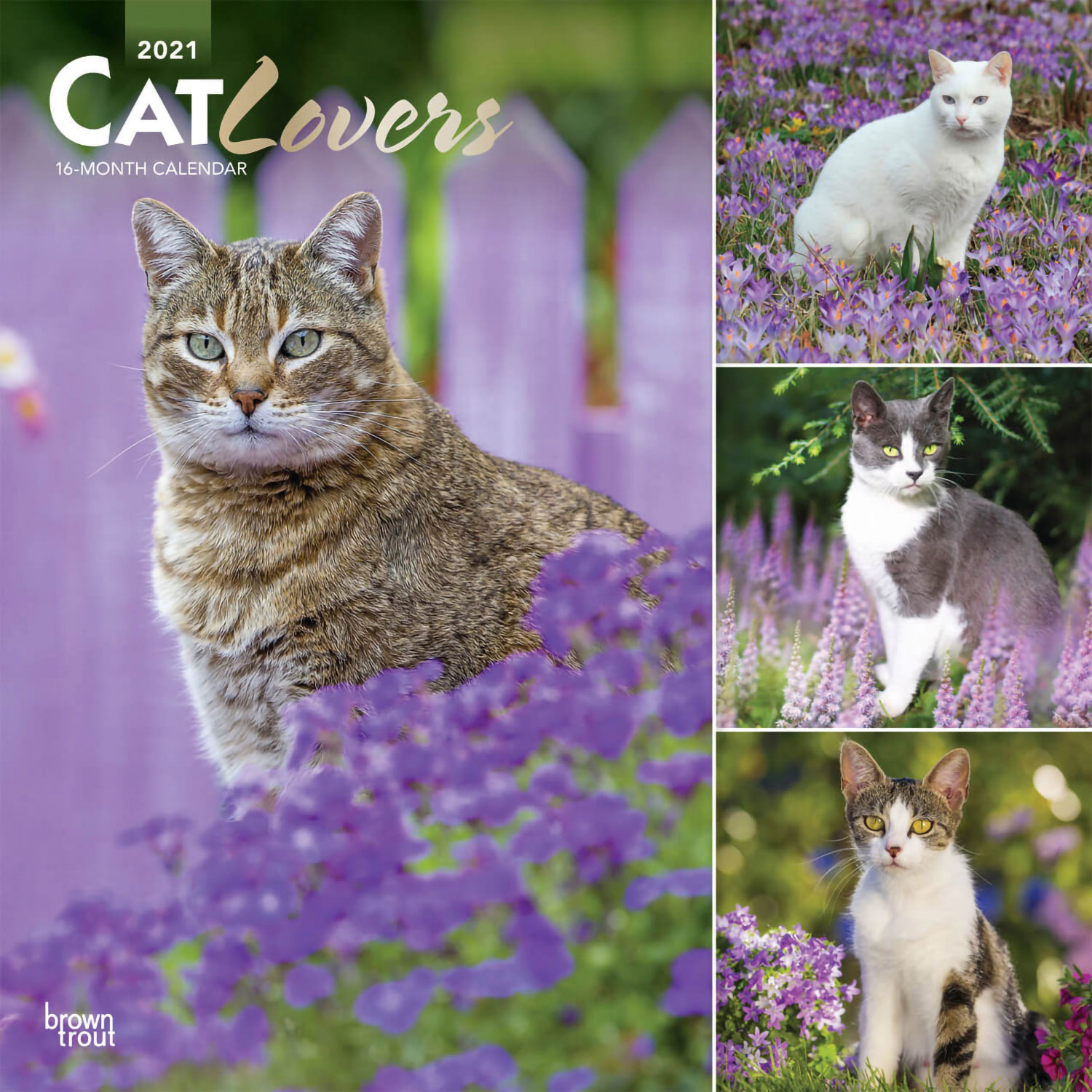 Cat Lovers Kalender 2021