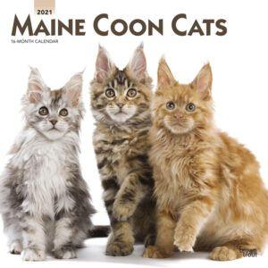 Maine Coon Cats Kalender 2021