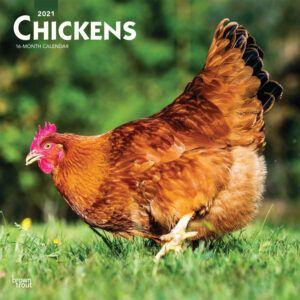 Chickens Kalender 2021