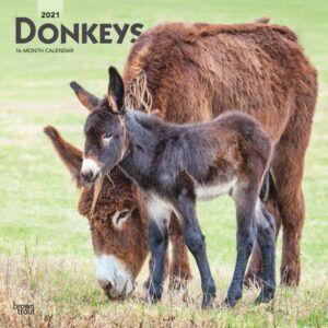 Donkeys Kalender 2021