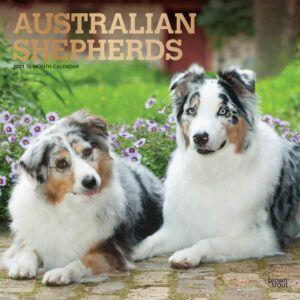 Australian Shepherds Kalender 2021