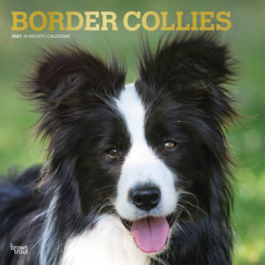 Border Collies Kalender 2021
