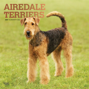 Airedale Terriers Kalender 2021