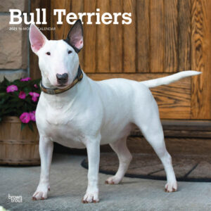 Bull Terriers Kalender 2021