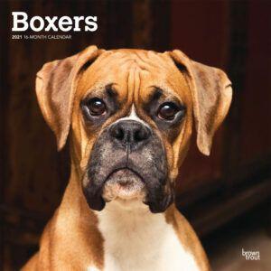 Boxers Kalender 2021