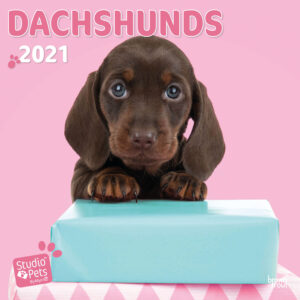Dachshund Studio Pets Kalender 2021