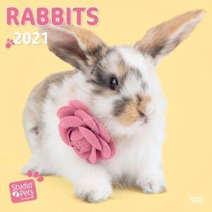 Rabbits Studio Pets Kalender 2021