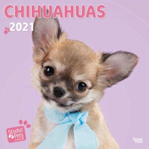 Chihuahuas Studio Pets Kalender 2021