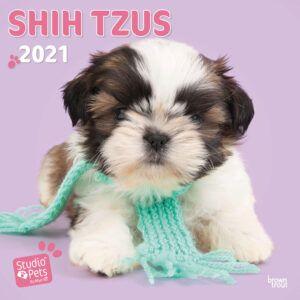Shih Tzus Studio Pets Kalender 2021