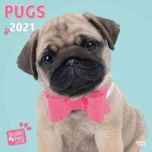 Pugs Studio Pets Kalender 2021