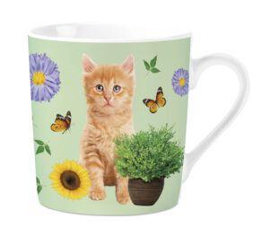 Mok Orange Tabby Kitten