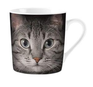 Mok Grey Cat's Eyes