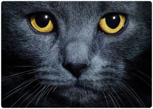 Placemat Black Cats Eyes