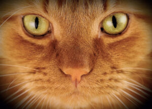 Placemat Ginger Cat's Eyes
