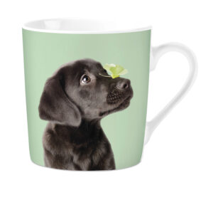 Mok Studio Pets Labrador