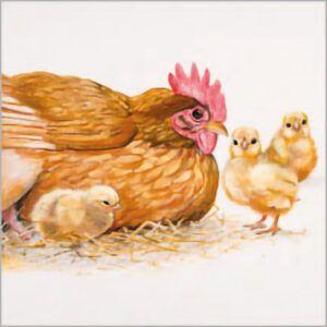 Kaart CS Hen and Chicks