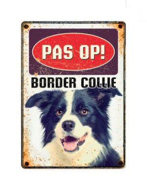 Bord Blik Border Collie