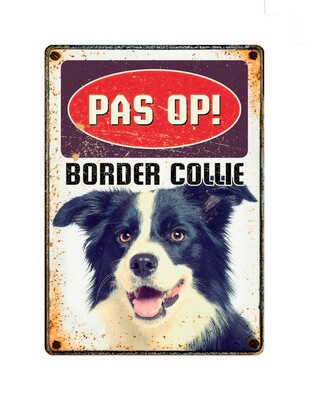 Bord Blik Border Collie