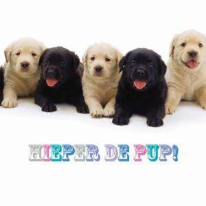 Sq Kaart Hieper De Pup!