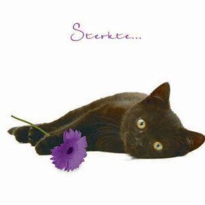 Sq Kaart Sterkte Kat
