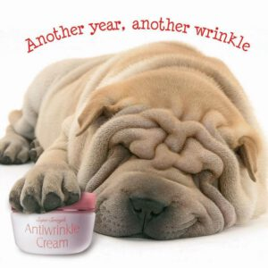 Sq Kaart Dog Another Wrinkle