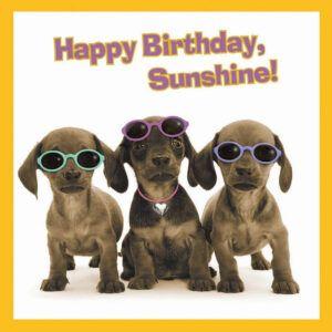 Sq Kaart Happy Birthday Sunshine!