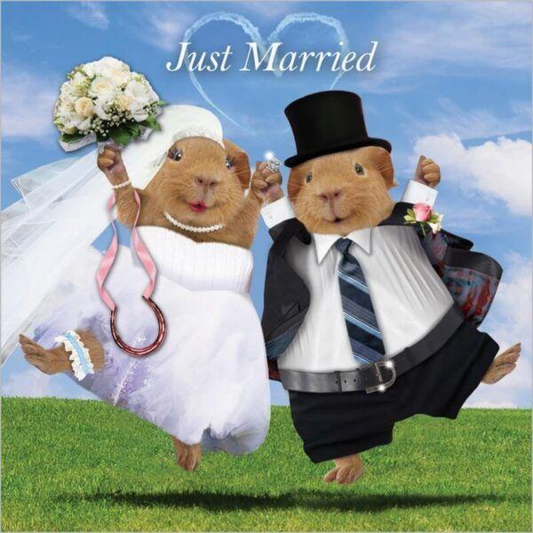 Sq Kaart Guin Pigs Just Married