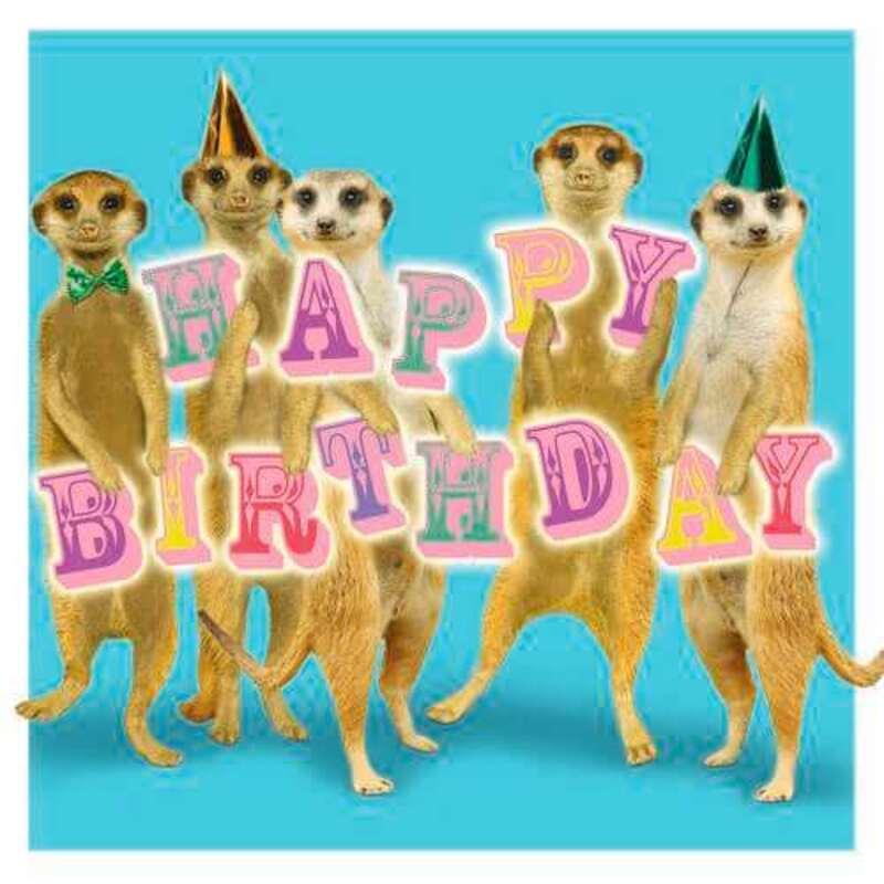 Sq Kaart Meerkats Birthday