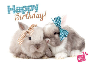 Kaart Myrna ENG Happy B Rabbits (h)