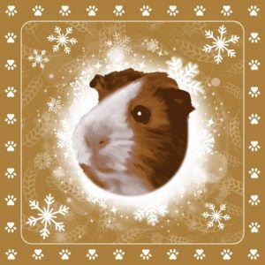 Servetten Guinea Pig