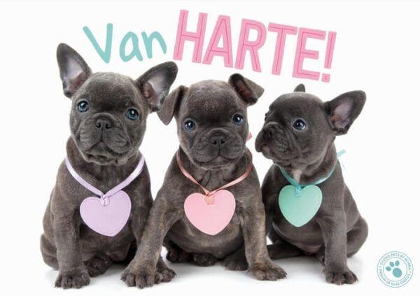Kaart Myrna NL Van Harte! (h)