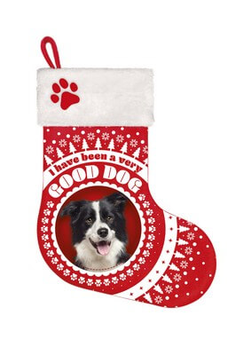 Stocking Border Collie
