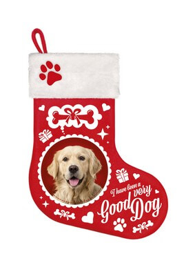 Stocking Golden Retriever