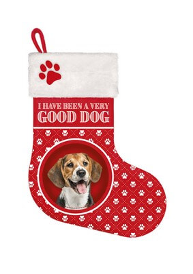 Stocking Beagle