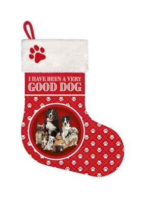 Stocking Dog mix