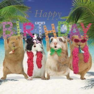Sq Kaart Birthday Party
